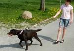 DOG E-walk Basic Pull Stop