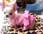 Haljinica za psa Pink Love