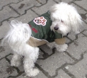 Jakna za psa Barberi Šapica zelena 46 cm