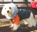 Jakna za psa Polar GOROTEX oranž/siva
