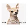 Ogrlica za psa Love