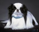 SWAROVSKI ogrlica za psa Tiny Crystal 4