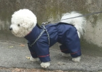 Skafander za psa MAX CLASSIC Gore Tex