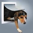 Vratanca za  pse srednje veličine
