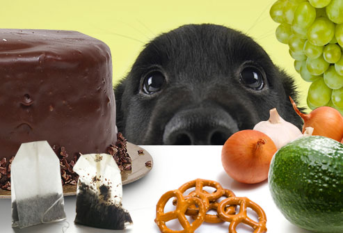 Opasna hrana za pse